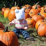 e-pumpkins-2