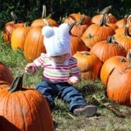 Cute young baby girl sitting in a pumpkin patch.