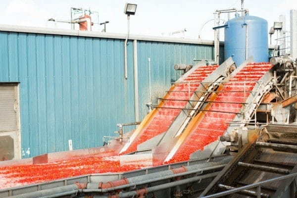 Image of tomatoes moving on conveyer belt at tomato processing plant.